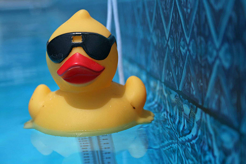Rubber_duck_in_pool